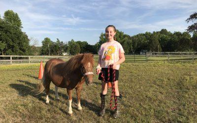 Horse Trainer in training.